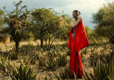 Aloe masai